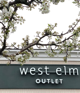 West Elm Outlet Art